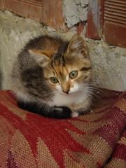 Thinking (nett_mimi) Tags: green cat thought sweet