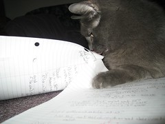 Eating my Math homework (Leya :P) Tags: cats cat paper grey homework russianblue theperfectphotographer eatmyhomework