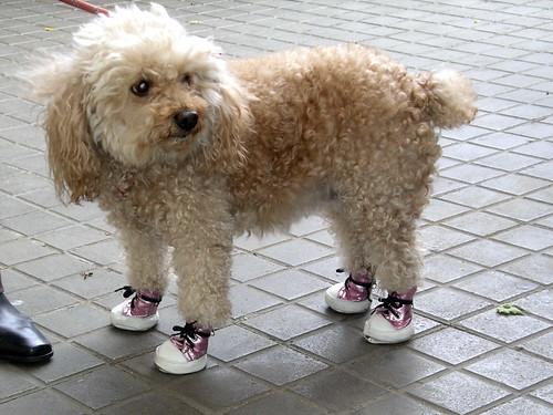 2008 El perro con botas