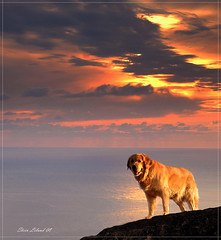 Faithful Partner (steinliland) Tags: ocean sunset sea dog norway soe thera lofotenislands abigfave anawesomeshot aplusphoto ultimateshot diamondclassphotographer thegoldendreams steinliland grouptripod atomicaward