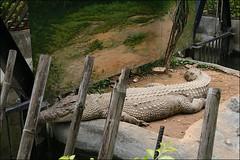 新竹市立動物園27