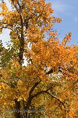 autumn-mohsen moossavi (6) (Mohsen MoossaviZadeh) Tags: iran  mashhad khorasan  torghabeh