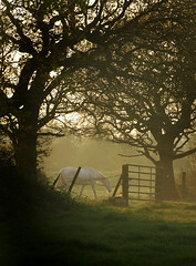 Horse at Storeton (jimmedia) Tags: horse storeton