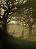 Horse at Storeton (jimmedia) Tags: horse storeton