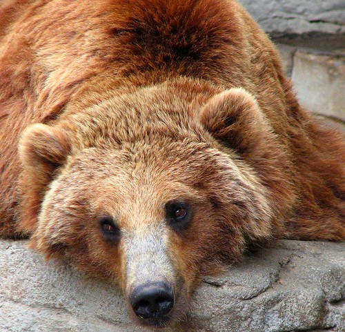 """The """"Grizzled"""" in Grizzly"""