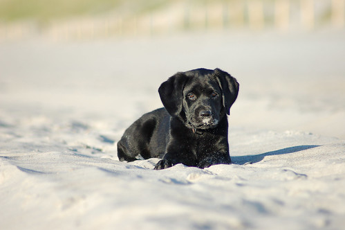 Sand and puppy