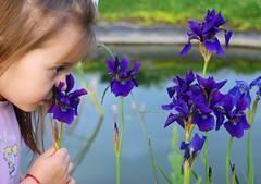 irises: violet (-lera) Tags: iris flower fleur girl kid violet wonderfulworldofflowers catchycolorviolet