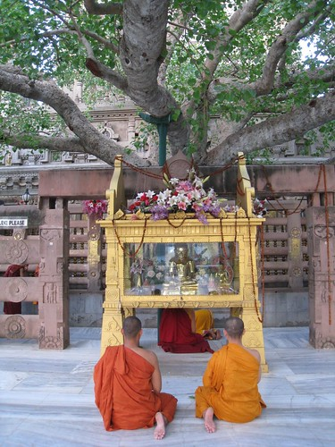 Monks under the Bodhi Tree