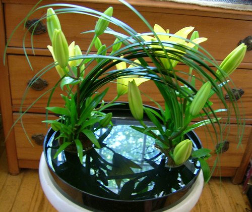 Ikebana to be viewed form above