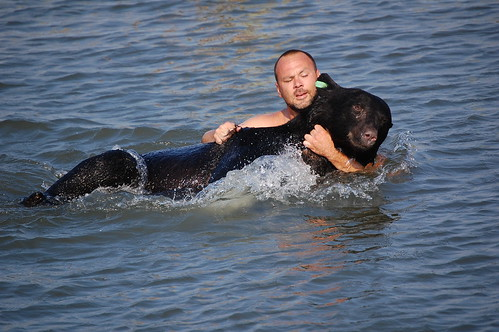 Bear rescues bear