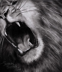 Lion Drawing (Little Lioness) Tags: art artwork graphite roaringlion littlelioness liontattoos fineartforsale sarahbartell liondrawing photorealisticdrawing bigcatlover drawingofalion angryliondrawing lionartwork roaringliontattoos photorealismdrawing picsoflionsroaring lionroaringdrawing awesomedrawingofalion lionessdrawing drawingbyteenagers photosofbigcatsroaring realisticliondrawing roaringlionpics drawingoflionroar drawingoflionroaring awesomeliontattoo awesomeanimaltattoos realisticanimaltattoos