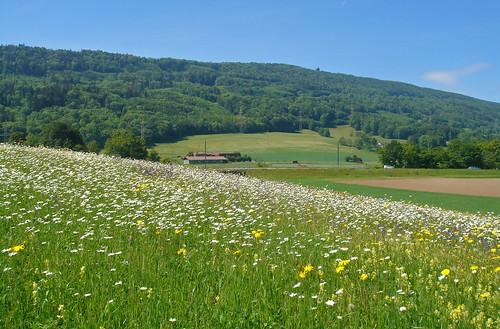 Lägern mit Blumenwiese