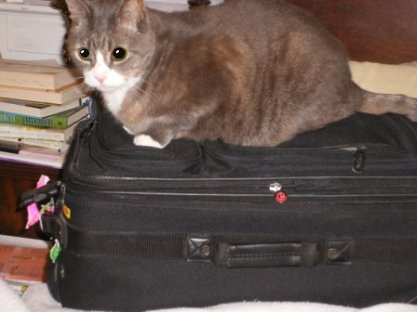 LB on Suitcase