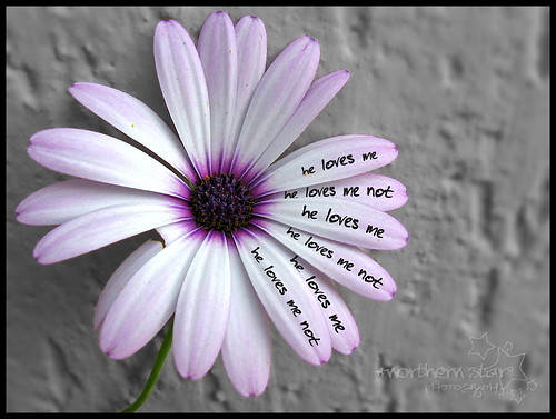 he loves me/he loves me not. by *northern star° {busy bee}