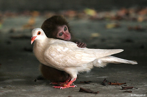 Monkey and Pigeon / macbros
