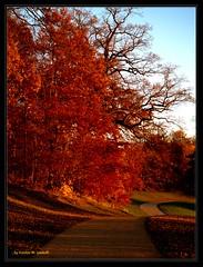 Autumn sunset (Kirsten M Lentoft) Tags: park autumn trees sunset fall path themoulinrouge blueribbonwinner outstandingshots abigfave frederiksborgcastle colorphotoaward impressedbeauty momse2600 treesubject diamondclassphotographer flickrelite overtheexcellence thegoldenmermaid kirstenmlentoft