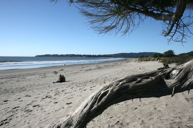 Stinson Beach through branch