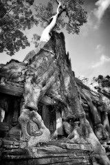 tree (Agron) Tags: blackandwhite tree history window overgrown vertical ancient ruins cambodia khmer perspective wideangle nopeople siemreap angkor preahkhan humaninterest kmer agrondragaj campuchia druni december2007 nikond3 kamboxhe kamboxha