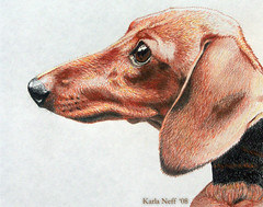 SHORTHAIRED DASCHUND (Doggies Are From Heaven) Tags: dog art pencil drawing daschund coloredpencil artlibre