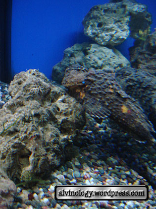 stone fish again