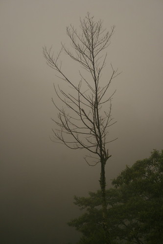 Early morning mist at Gunung Brinchang