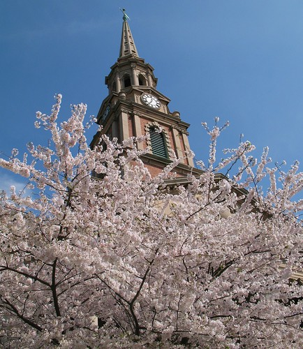 Cherry Blossoms and Steeple