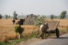 egypt-IMG_0980.JPG