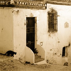Year of the cat (cuellar) Tags: door espaa window rural cat ventana spain puerta europa europe cuellar andalucia gato granada duotoned rejas goldstaraward