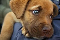 Dikt om en hund…