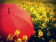 #8/365- The red umbrella (Her life in pictures) Tags: flowers red yellow umbrella lomo explore