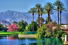 Palm Springs, California (Mine Beyaz) Tags: california pink blue lake mountains green spring palmsprings palmtrees bol yesil daglar palmiye mavi soe bahar blueribbonwinner pembe supershot 5photosaday abigfave anawesomeshot theperfectphotographer