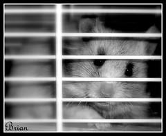 My Bear/hamster