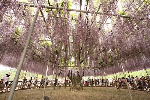 Ashikaga Flower Park 12