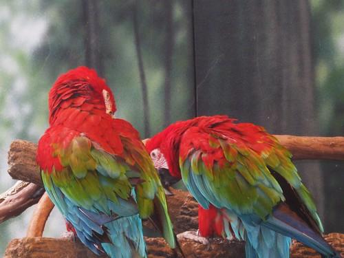 birdsofcolor