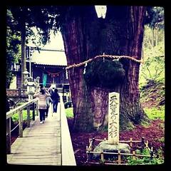 展覧の大杉