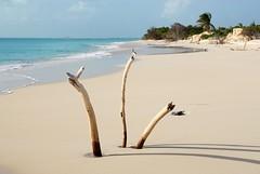 SLU_0362 (luca.gargano) Tags: voyage travel caribbean exploration viaggio antilles caribe caraibi barbuda gargano lucagargano
