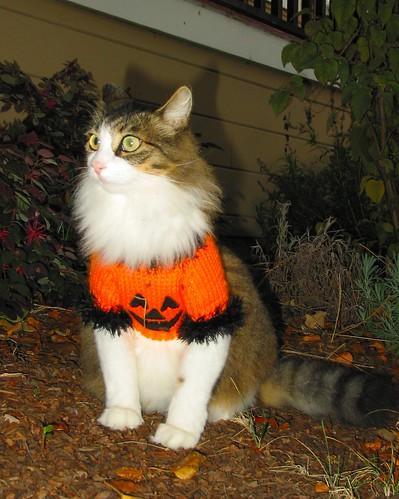 Hobo with her Halloween sweater on...3997