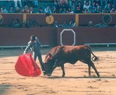 "Andrés Roca Rey ""El Andi"" debuta en Acho"