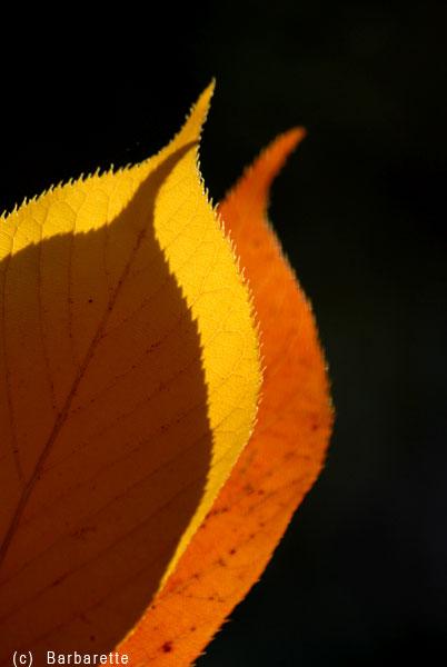 feuilles3