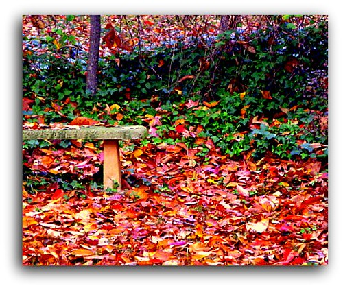 on Exploreautumn carpet of many colors