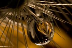 rosedrop (Auch Einer) Tags: flowers cactus flower detail macro reflection nature water closeup canon drops flora details drop sphere refraction athome f22 waterdrops liquid smrgsbord retroadapter supershot retromacro rebelxti colourartaward