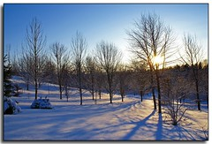 On a Winter's Day (Roger Lynn) Tags: trees winter sunset snow shadows moscow arboretum idaho universityofidaho palouse superbmasterpiece diamondclassphotographer naturessilhouettes worldwidelandscapes mybestimageforjanuary2008