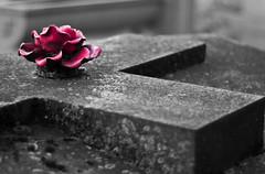 DSC_0030 (Albert78000) Tags: bw paris cemetery grave stone angel cutout dark death nikon nb montparnasse cimetire albert92 accphotoparisblogspotcom albertcortel