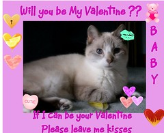 Can Baby be your Valentine (Yvonne in Willowick Ohio) Tags: cats cute fuzzy adorable fluffy kisses valentines meow loveable cutefaces cuteeyes catkisses happpyvalentinesday
