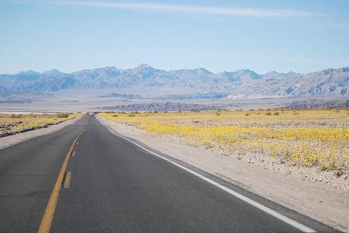 Road through the desert flowers