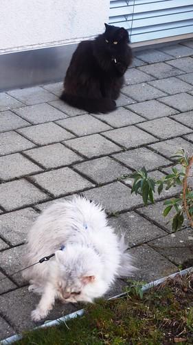 Nera & Fluffy