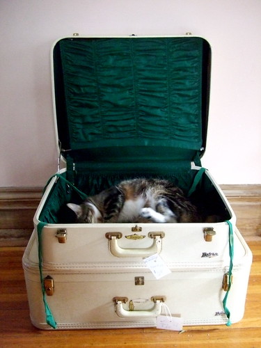 Cat In A Suitcase. cat in the suitcase. I adore the color of the lining