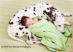Protector (WhamBam Pam) Tags: dog green love warmth canine sleepy spots newborn dalmatian mywinners meltmyheart impressedbeauty excellentphotographerawards goldwildlife interestingdogsposes