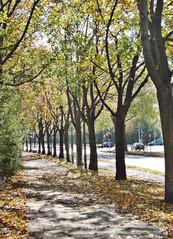 Schweinfurt in the fall (Julie Danielle) Tags: street autumn trees tree fall leaves germany bavaria europe schweinfurt juliedanielle