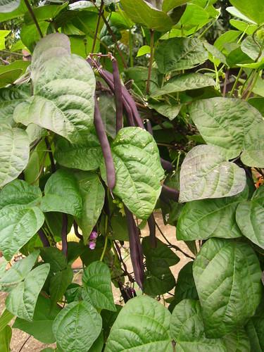 Garden 2008.7.18 - 5